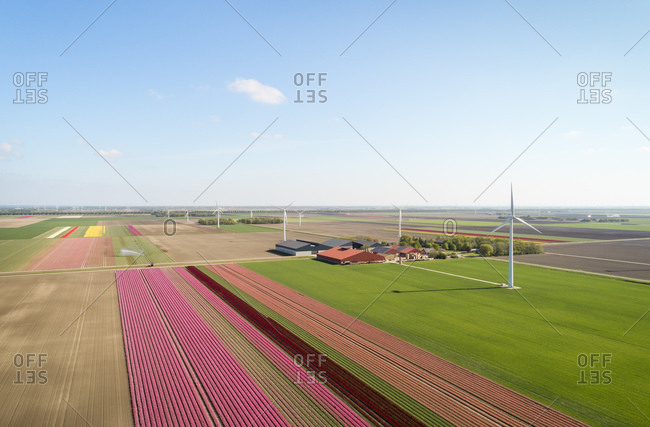 Aerial view of bulb fields in the north of Netherlands with farm in the mid distance.