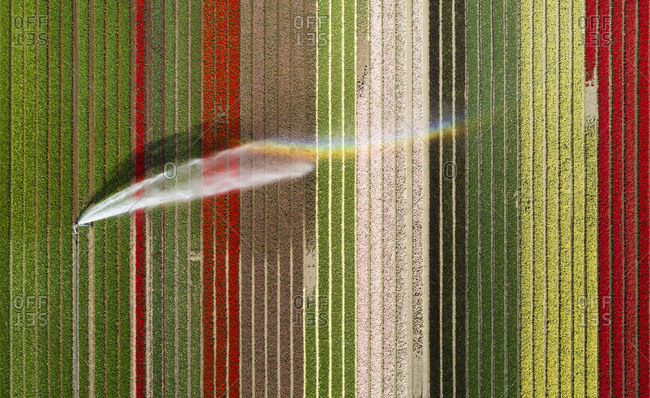 Aerial view of bulb fields in the north of Netherlands being irrigated.