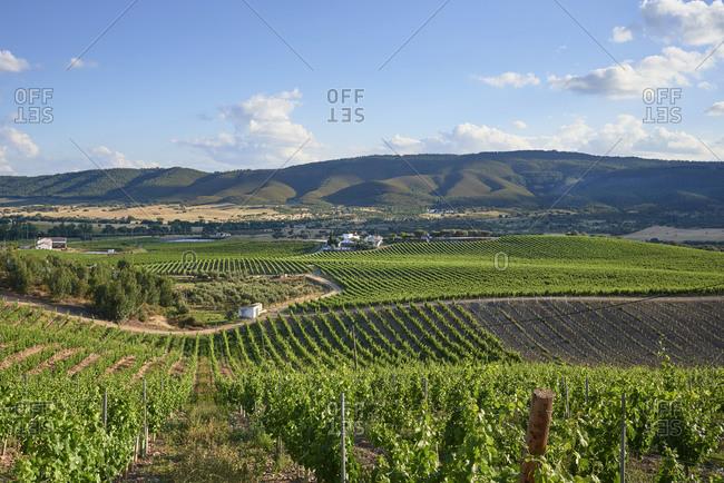 A vineyard in Alentejo, Portugal