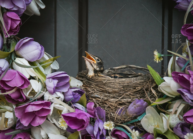 Bird's nest on a floral wreath with baby robins peeking over the edge.