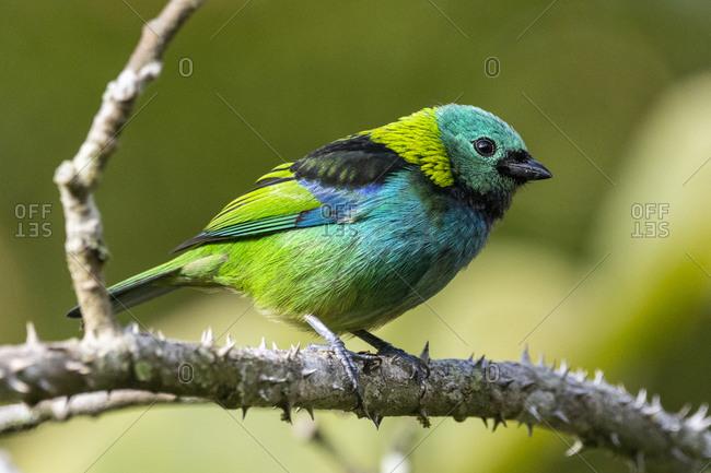 Beautiful colorful rainforest bird on tree branch
