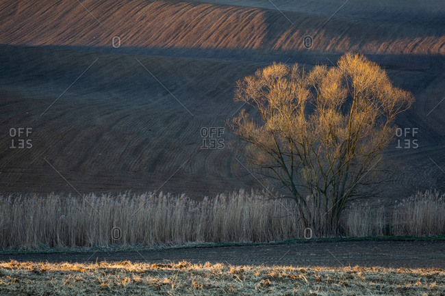 Tree in dry meadow in Turiec region, Slovakia.