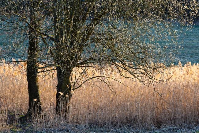Close up of tree in field in Turiec region, Slovakia.