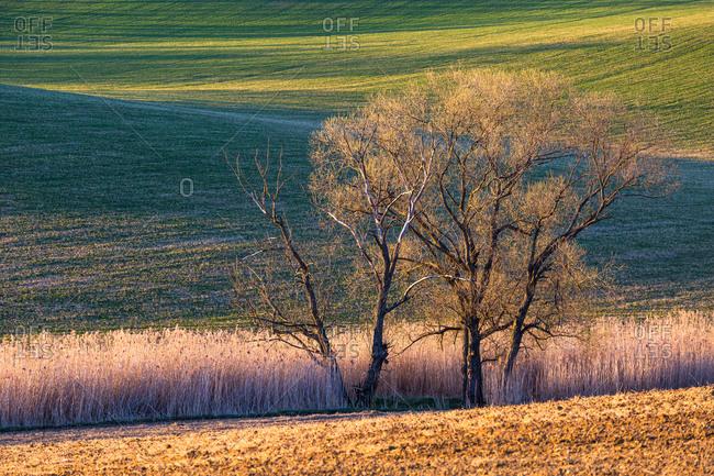 Green in green meadow in Turiec region, Slovakia.