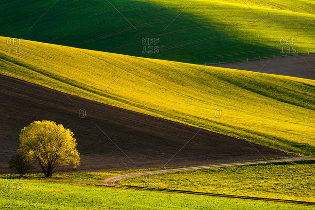 Green fields in Turiec region, Slovakia.