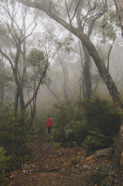 Young woman walks into the mist at the lush forest of Grampians National Park, Victoria, Australia