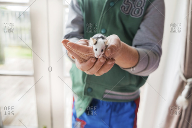Young boy holding pet mouse in his hands