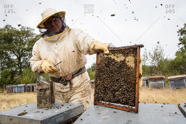Rural and natural beekeeper, working to collect honey from hives