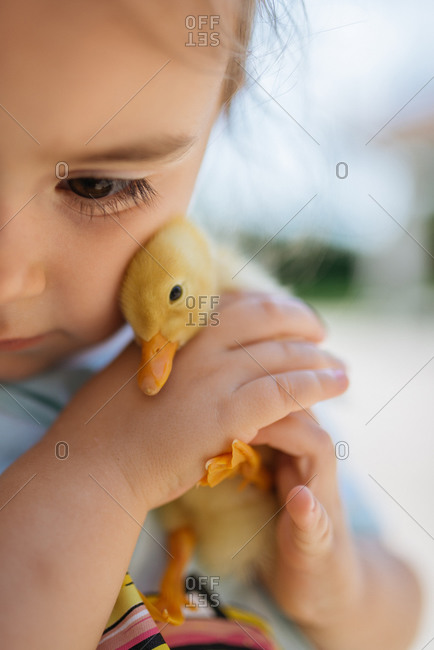 Girl holding a yellow duckling in her hands closeup.