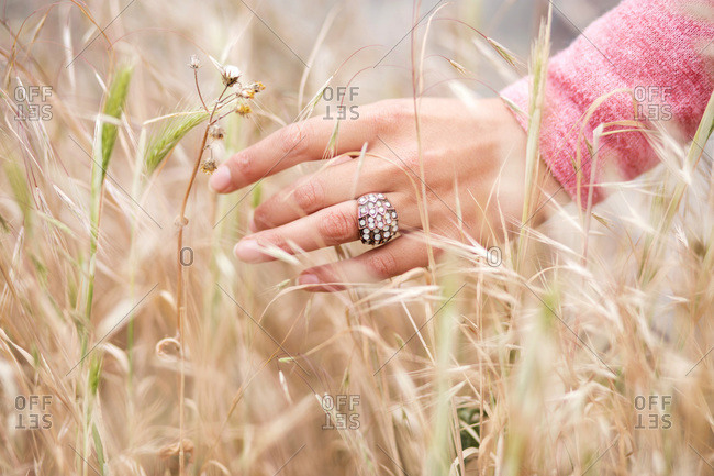 Woman's hand touching wheat in golden wheat field