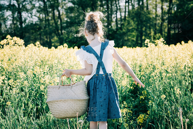 Young girl collecting flowers in a basket in a flower field in Sweden