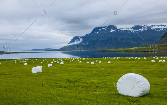 Hay rolls on a field in the eastern fjords of Iceland