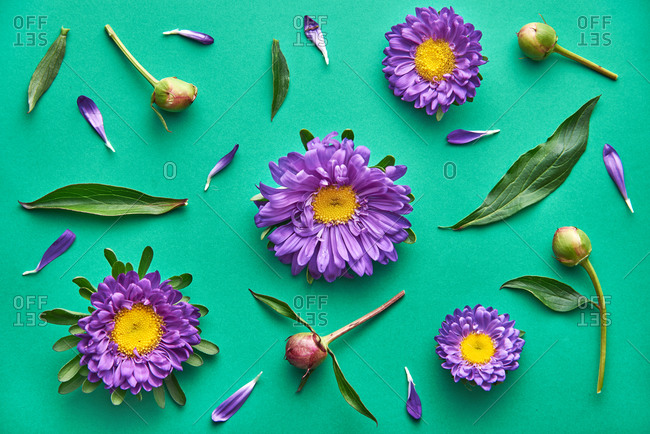 Purple daisy flower pattern on a green background. Top view