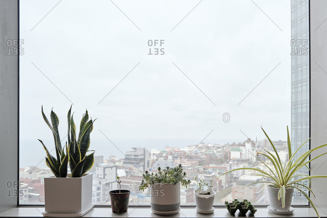Potted Plants on a Window Sill in an Urban Apartment