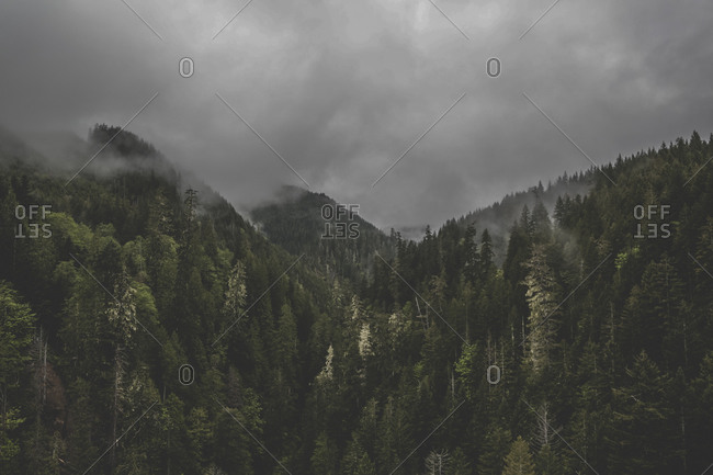 Moody landscape shot of clouds floating through evergreen forest