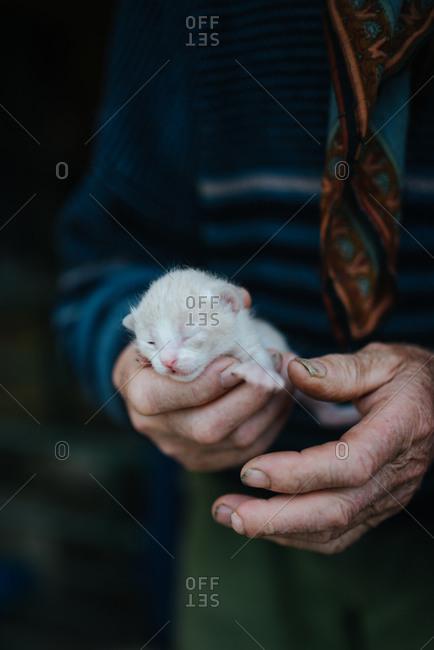 Old man holding little kitten closeup
