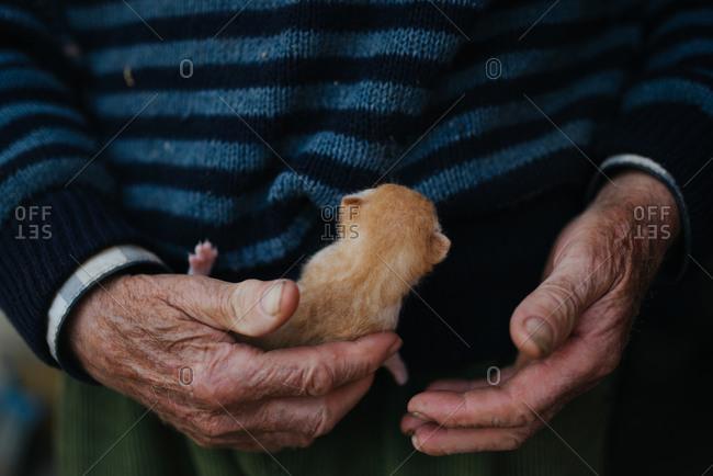 Man holding little kitten. Arms closeup.