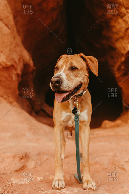 pitbull mutt pants outside of cave entrance with color and leash
