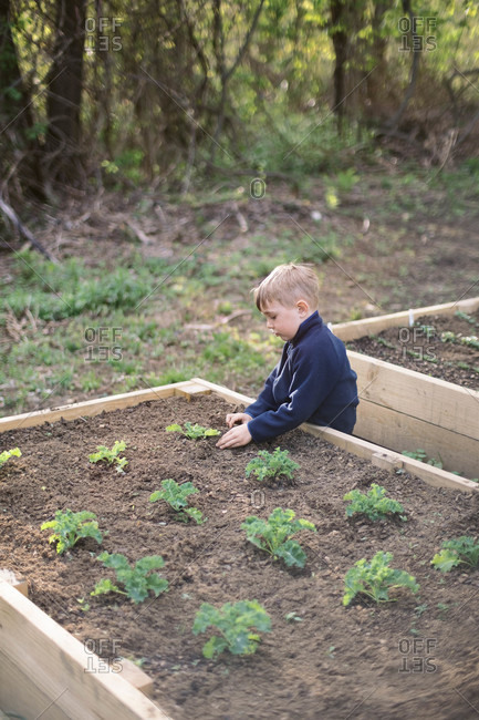A little boy playing in his raised vegetable garden.