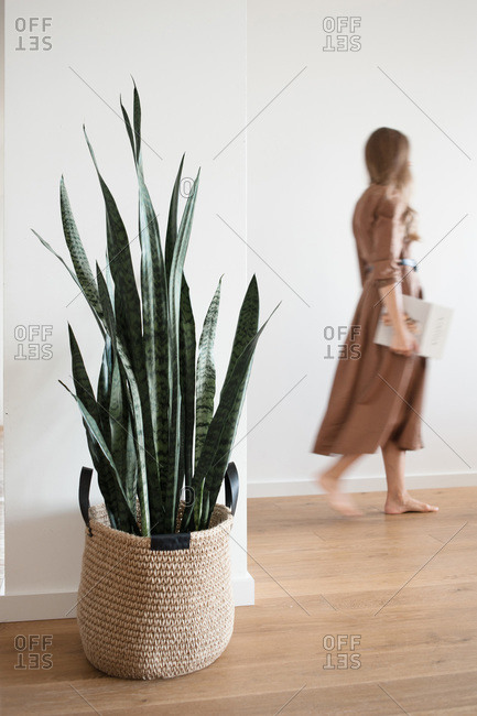 Moving silhouette of woman in light interior with plant in jute basket