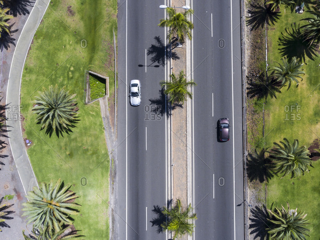 Aerial view of the streets in a city lined with palm trees