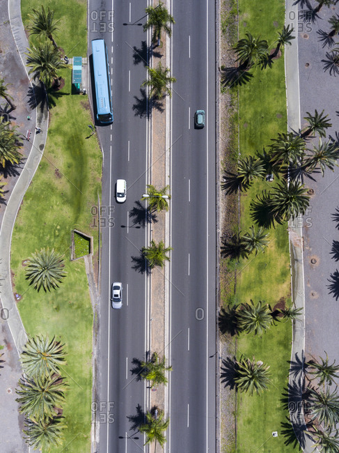 Bird's eye view of the streets in a city lined with palm trees