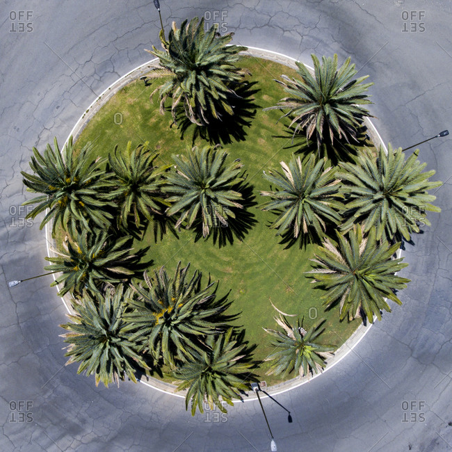 Roundabout with the palm trees
