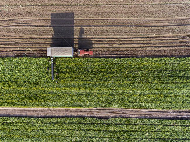 Workers harvesting vegetables in a field viewed from above