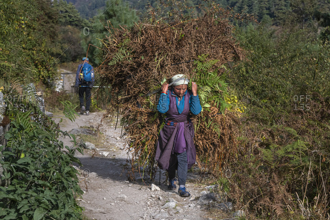 October 29, 2019: Woman carries food for the animals, Nepal