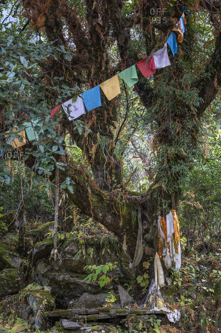 Tree decorated with prayer flags in Nepal