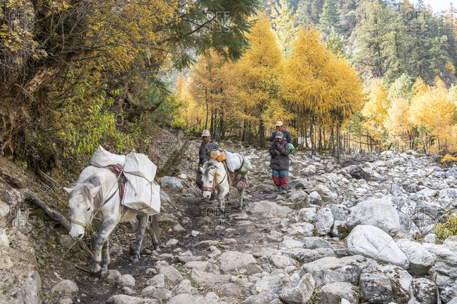 October 29, 2019: Transport caravan from Tibet, Nepal