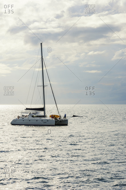 September 17, 2019: People on sailing boat watching Humpback whales (Megaptera novaeangliae), Queensland, Australia