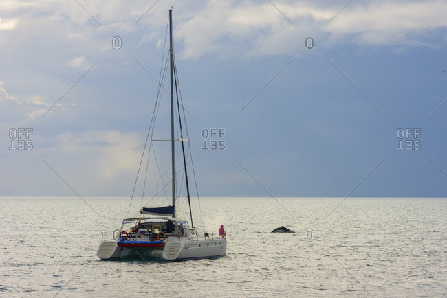 September 17, 2019: People on sailing boat watching Humpback whales (Megaptera novaeangliae), Hervey Bay, Queensland, Australia