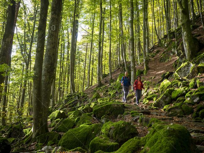 Hiking on the Zwealersteig, Bannwald Zweribach