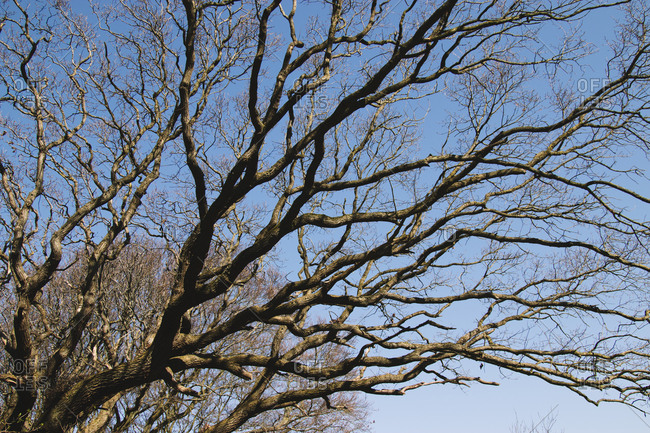 Detail of tree in Geltinger Birk nature reserve, Baltic Sea, Schleswig Holstein.