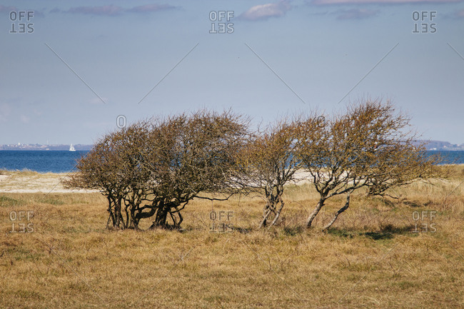 Nature reserve Geltinger Birk, Baltic Sea, Schleswig Holstein.