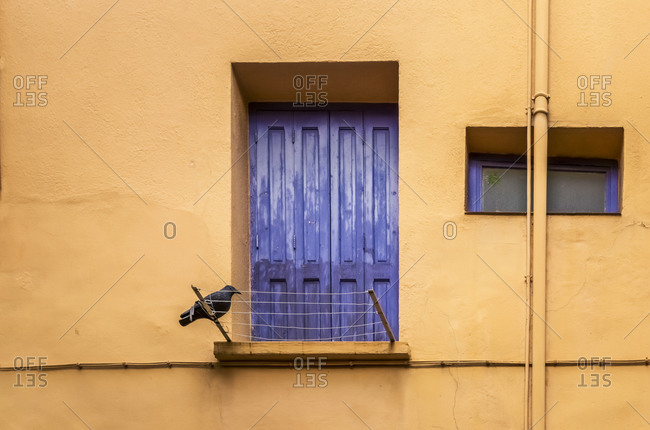 Colored wooden shutter in Collioure, France