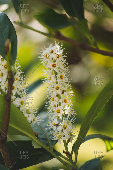 Close up of white flower on tree