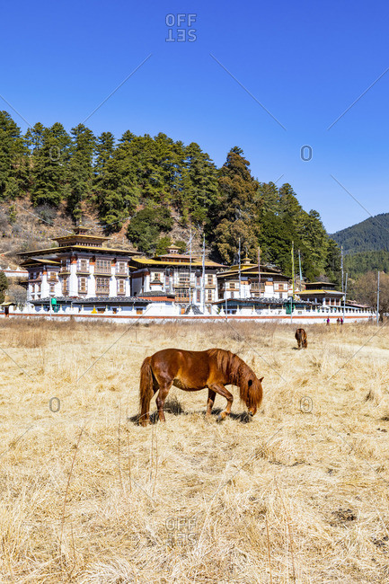A horse in front of Kurjey Lhakhang, Bumthang, Bhutan