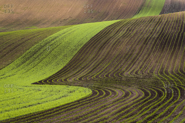 Scenic view of brown and green rolling hills near Kyjov, Hodonin District, South Moravian Region, Moravia, Czech Republic