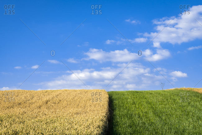 Agricultural field against sky on sunny day near Vrbice, Breclav District, South Moravian Region, Moravia, Czech Republic
