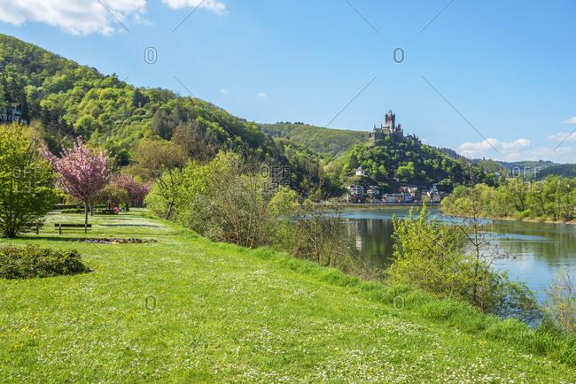 Flowering cherry trees with Cochem castle, Cochem, Mosel valley, Eifel, Rhineland-Palatinate, Germany