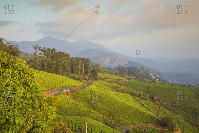 India, Kerala, Munnar, Road winding through Munnar tea estates