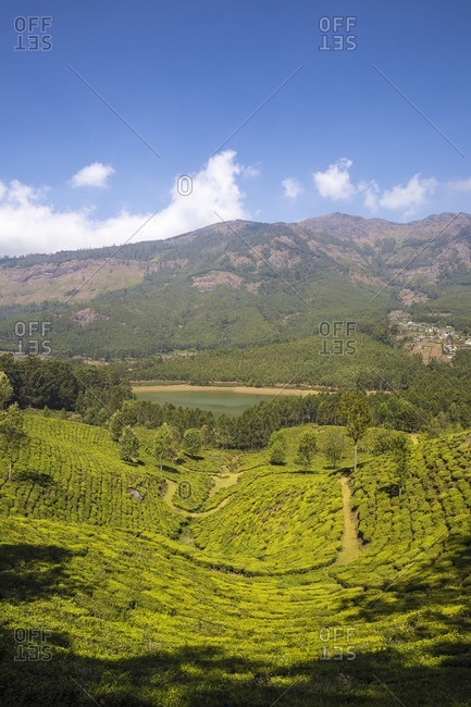 India, Kerala, Munnar, View of tea estates and Mattupetty Lake