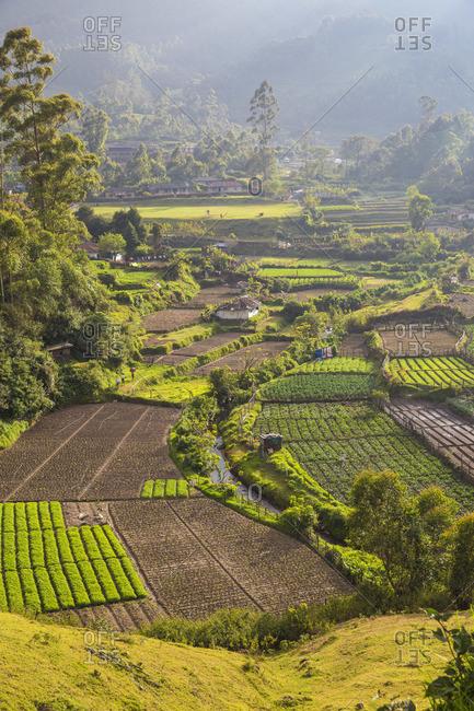 India, Kerala, Munnar, Farm lands