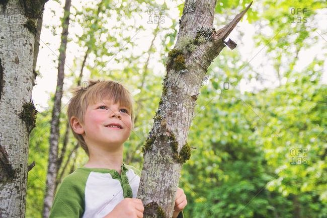 Smiling boy sitting in a tree, USA