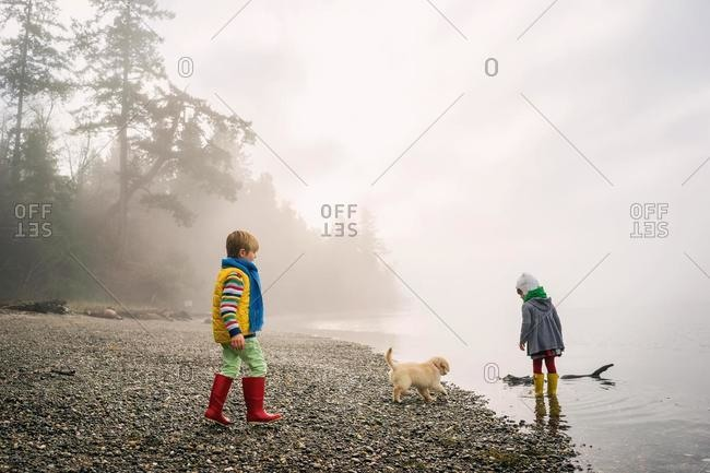 Boy and girl playing with golden retriever puppy dog on foggy beach