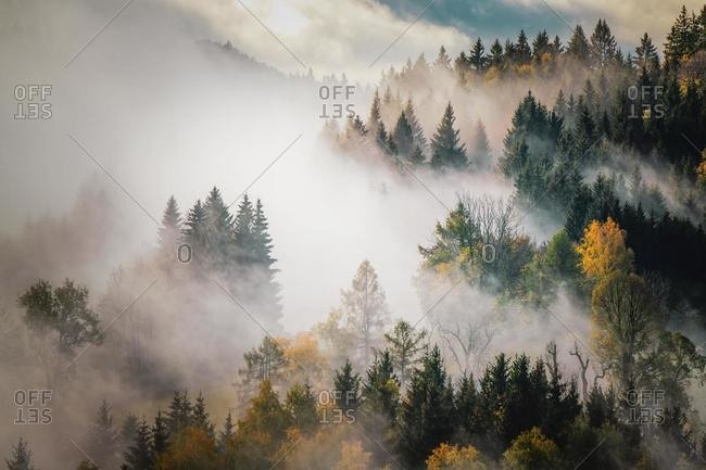 Autumn forest in the mist, Mount Gaisberg, Salzburg, Austria