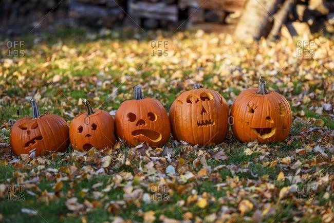 Five jack-o-lanterns lined up in a row in a garden, United States