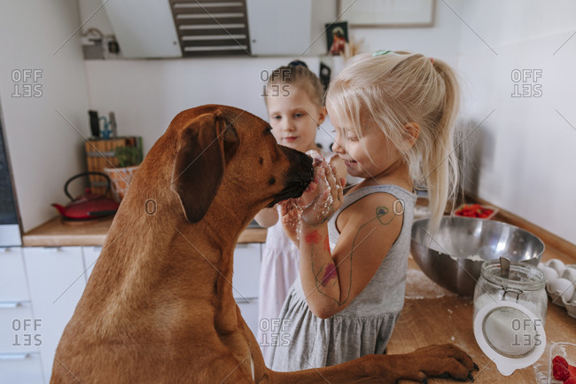 Girl with messy hands playing with dog in kitchen at home